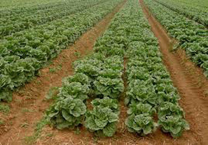 المنخفض يستنزف المزارعين في جنين