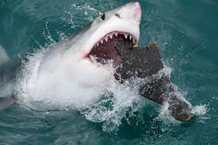 طائرات بدون طيار لرصد هجمات أسماك القرش