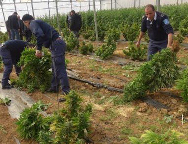 الشرطة: ضبط مخدرات وانجاز 2997 قضية