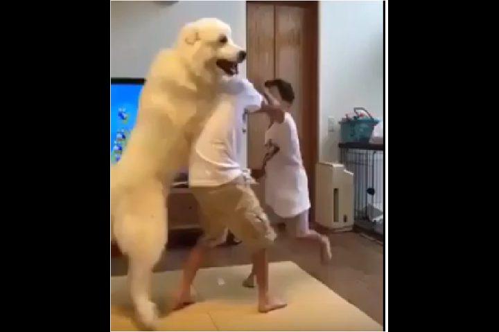 كلب يفض شجار بين أخوين