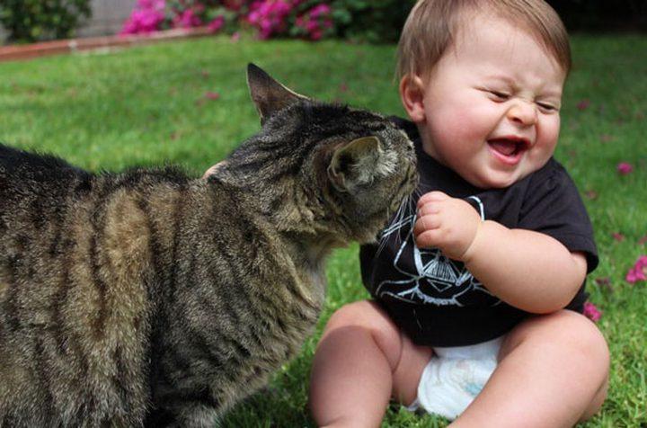 تربية القطط تهدئ الأعصاب