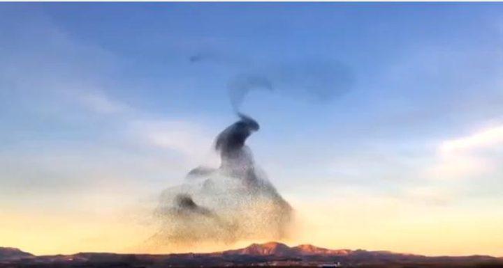 رقصة ل طيور الزرزور