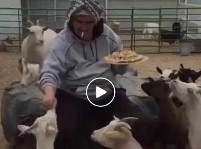 فيديو: يطعم عنزاته حلوى احتفاء بميلاد احدهن