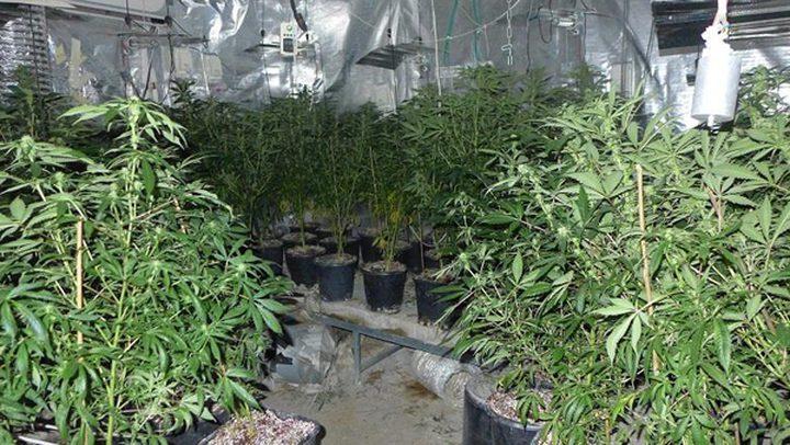 الشرطة تضبط أكبر مستنبت ومعمل لإنتاج المخدرات