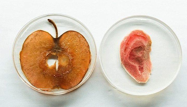 كندي يصنع أذنا بشرية من التفاح