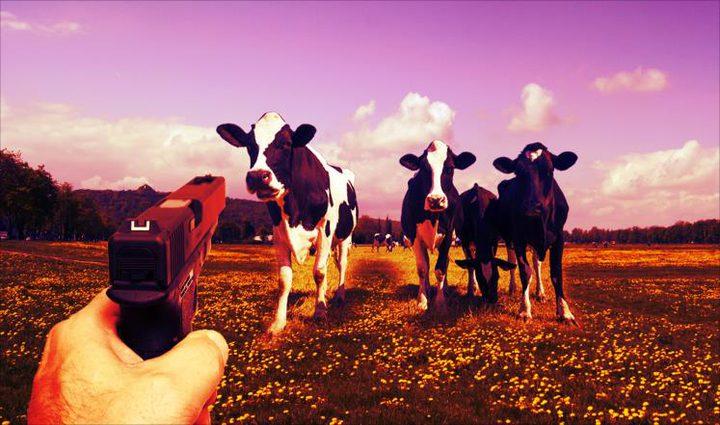 تغريم سويسري 14 ألف دولار لإشهاره السلاح بوجه أبقار