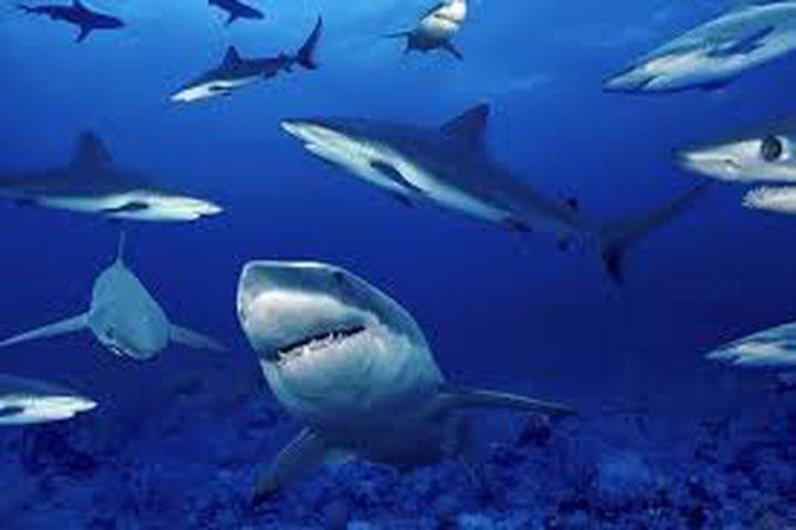 الأسماك في خطر بسبب الاحتباس الحراري