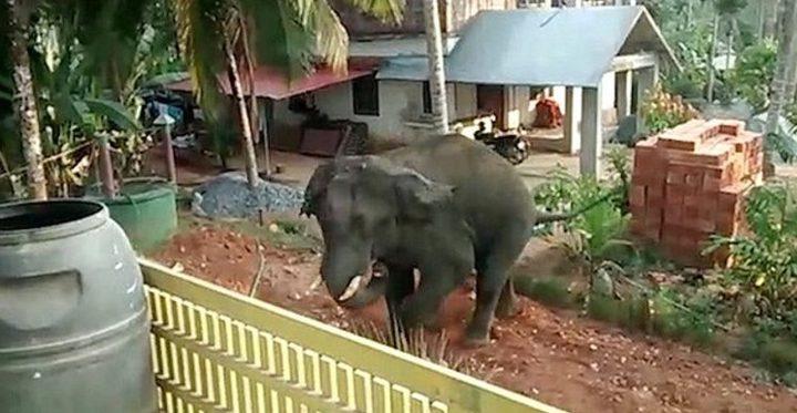 شاهد.. فيل هائج يطارد رجلا بالهند