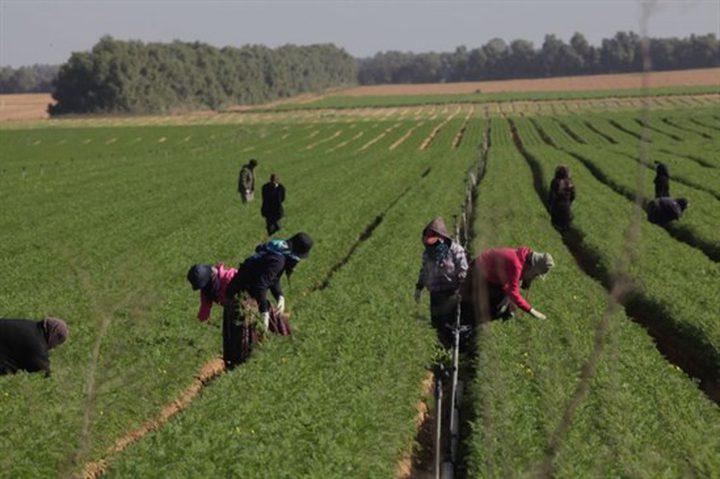 اسرائيل تستقدم 20 الف عامل صيني