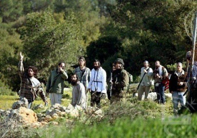 الاحتلال يقتلع أشجارا في مخيم عايدة