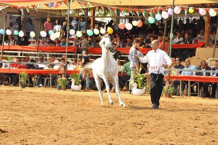 """بدء ربيع فلسطين لجمال الخيول العربية الأصيلة""""صور"""""""