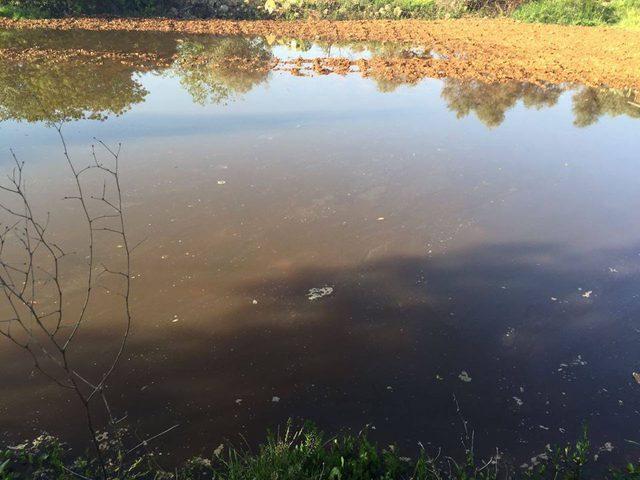 الاحتلال يغرق أراضي زراعية شرق بيت لحم بالمياه العادمة
