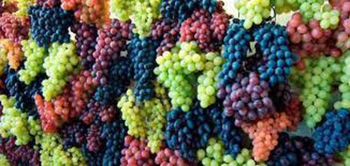 العنب... فوائد صحيّة متعددة
