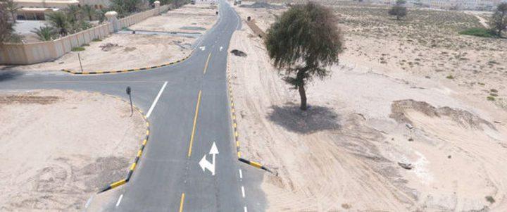 تحويل طريق في الإمارات بسب شجرة معمرة