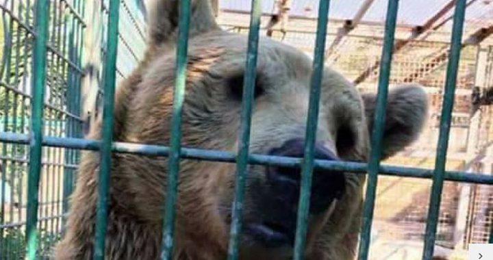 """رغم """"حادثة الدب"""".. التراجع عن قرار إغلاق الحديقة"""