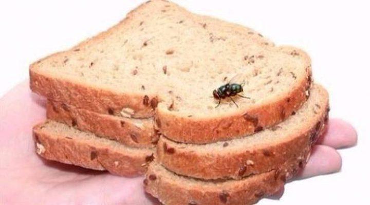 لهذه الأسباب عليكَ بالتخلص من طعامك إذا لمسه الذباب