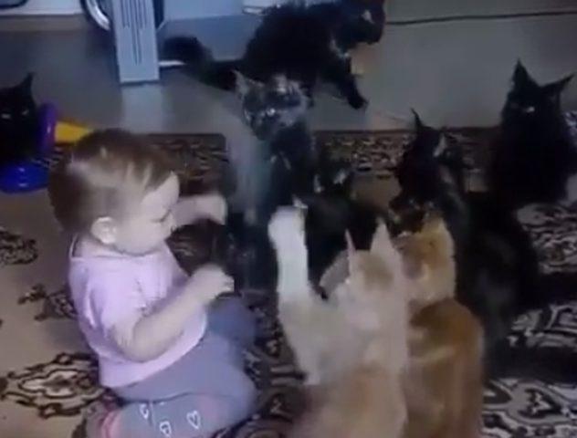 فيديو طفلة تلهو مع القطط يحصد الآف المشاهدات