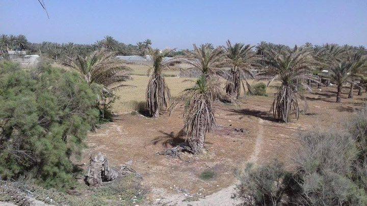 شبح الحصار يلاحق الأراضي الزرعية في غزة