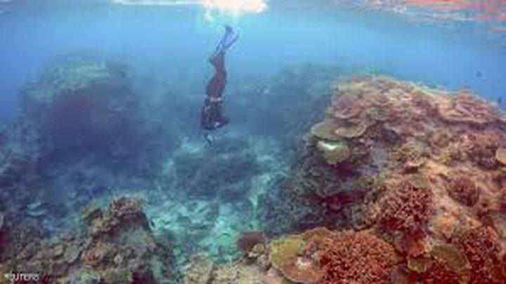 اليونسكو: يجب تكثيف الجهود لانقاذ الحاجز المرجاني العظيم