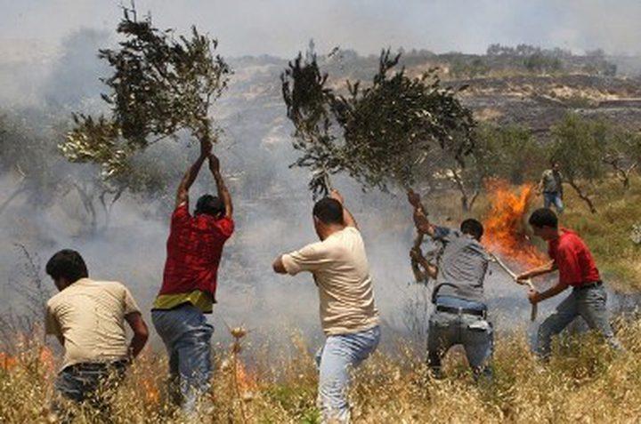 مستوطنون يشعلون النار في أراضي عصيرة القبلية