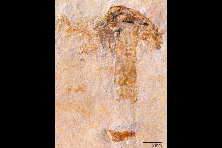 العثور على أقدم فطر في العالم بعمر 115 مليون سنة