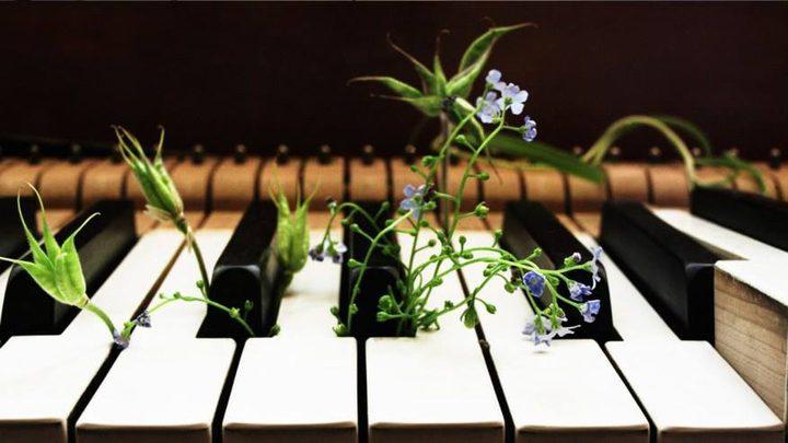 النباتات تشم وتسمع.. وماذا أيضاً ؟! (فيديو)