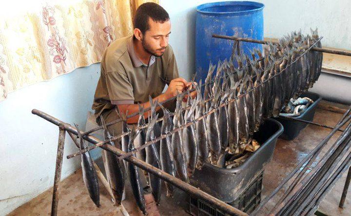 اسماك الرنجة تسجل حضورا ملحوظا بالأسواق الغزية