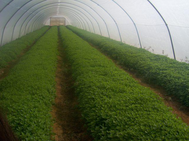 الأونروا تباشر بمشروعين يستهدفان القطاع الزراعي