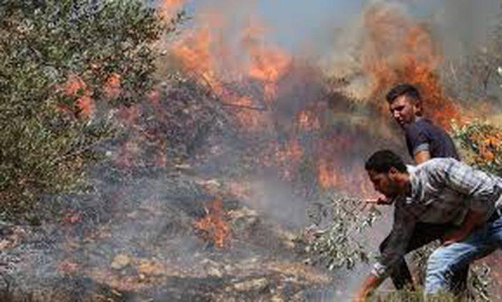 مستوطنون يحرقون مساحات شاسعة من أراضي قرية بورين