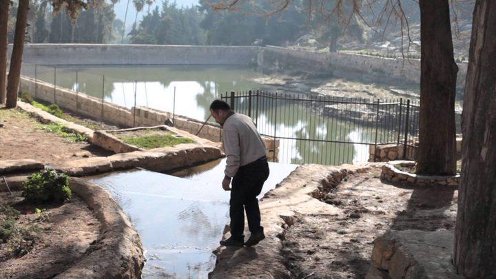 أعداد من ثعبان الماء في برك سليمان
