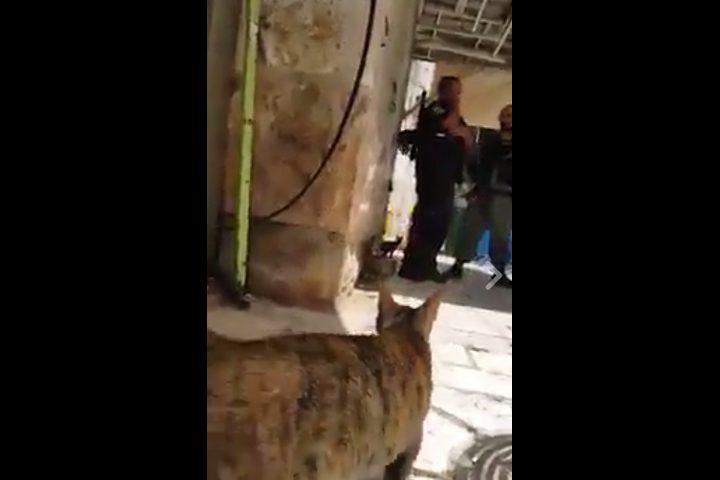 شاهد مواطن مقدسي يحاور قطة حول رأيها بالوضع الراهن