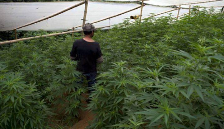 ضبط مشتلي مخدرات في الخليل