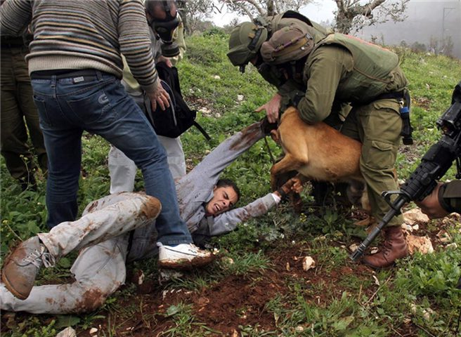 إصابة مواطن هاجمته كلاب المستوطنين في ياسوف