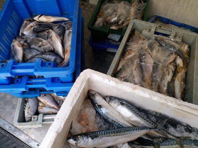 صور| اتلاف 80 كغم سمك غير صالحة للاستهلاك