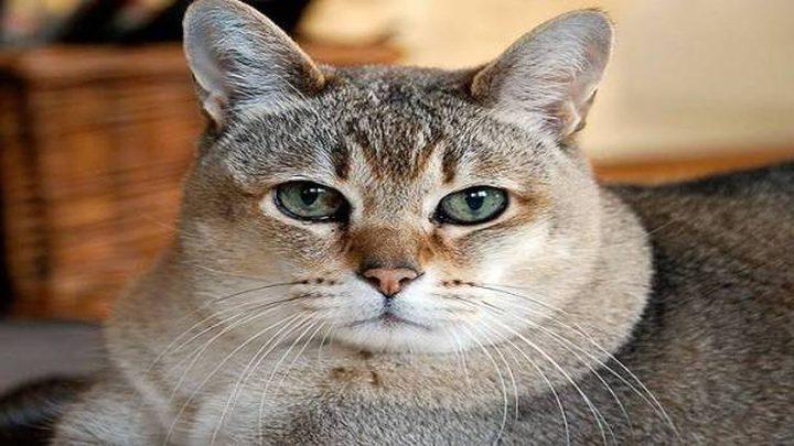 """الشرطة السعودية تعتقل """"سفاح القطط"""""""