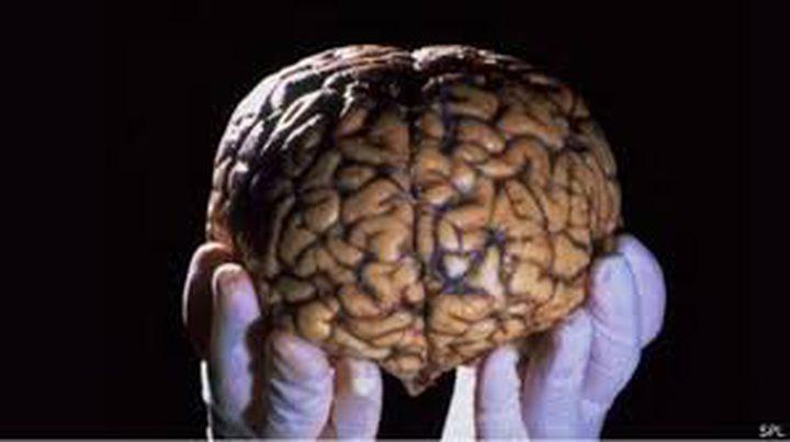 علماء يتمكنون من استنبات دماغ في مختبر