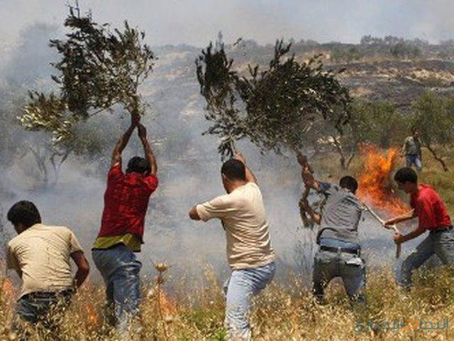 مستوطنون يحرقون أراضي جنوب نابلس