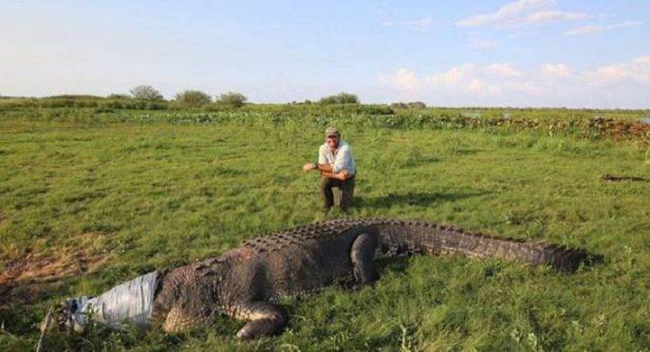 عالم يثير غضبا لتعامله مع تمساح! (بالصور)