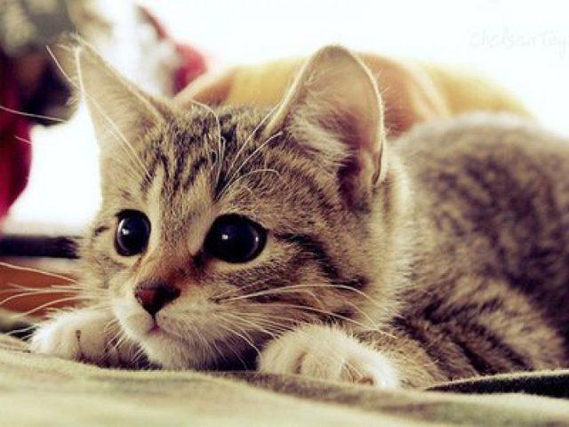 قطة تسبب خسائر بمقدار 40 ألف دولار