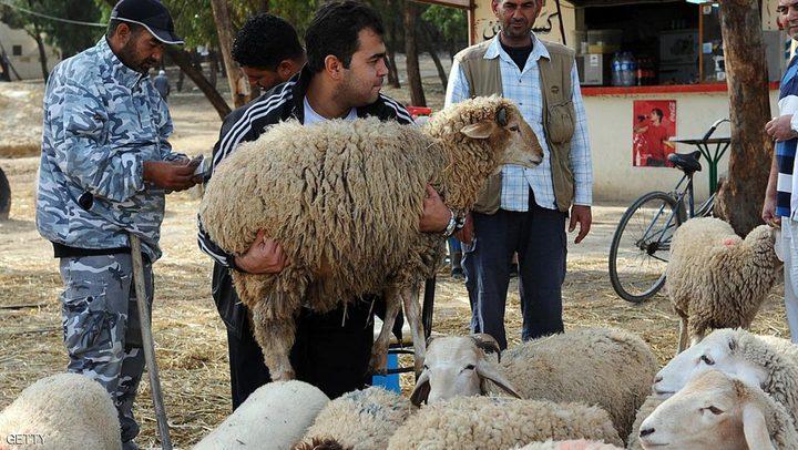 الزراعة: أحضرنا 25 الف أضحية... وإليكم أسعار اللحوم
