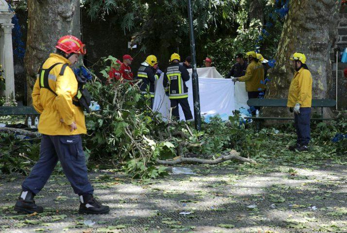 مقتل 13 وإصابة 50 في حادثة سقوط شجرة معمرة