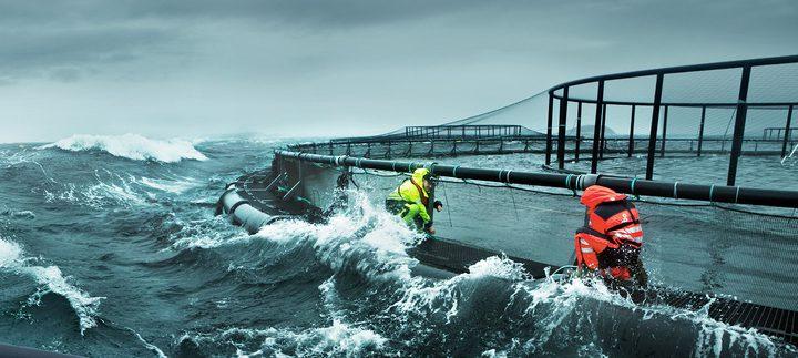 مستقبل مبهر ينتظر الزراعة المائية في البحر