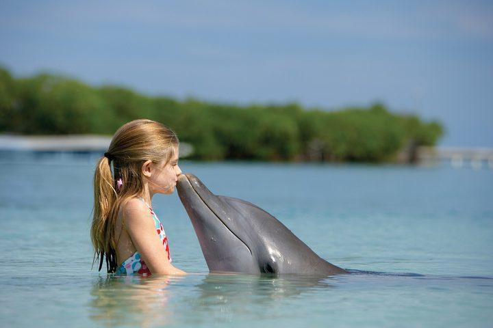 هذا ما تفعله الدلافين