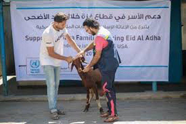 أونروا توزع أضاحي على 2,688 عائلة في غزة