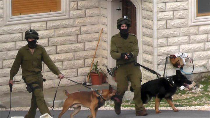 بكلاب متوحشة ...الاحتلال يداهم منزل مواطن في العيسوية