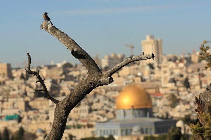 أوقاف القدس: نرفض قرار محكمة الاحتلال