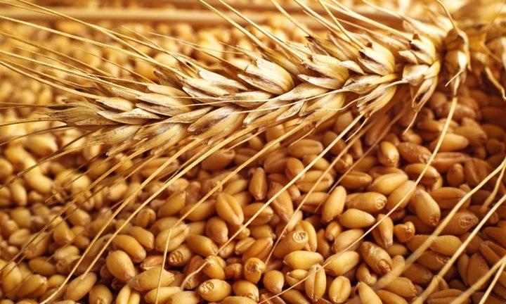 احتياطي مصر من القمح يسجل ثلاثة ملايين طن