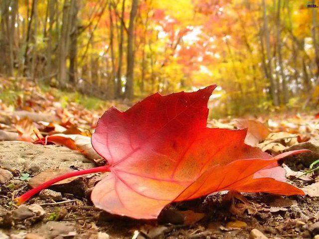 الخريف يبدأ الجمعة