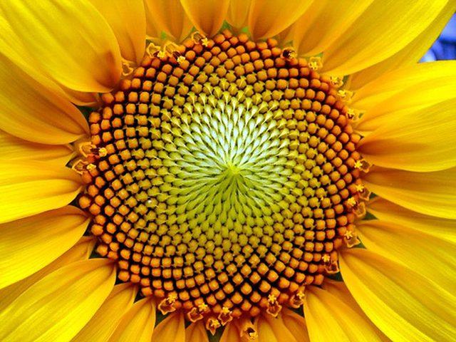 النسبة الذهبية... السـر الدائم لعلم الجمال ومقياس الإبداع