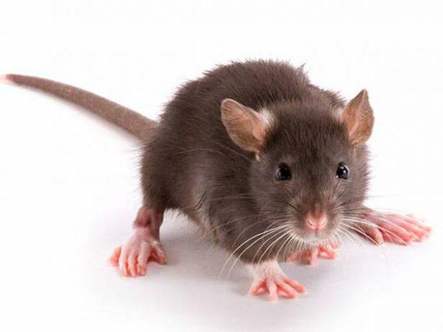 تفاجأت بفأر في غرفة نومها.. فهربت بطريقة لا تصدّق!